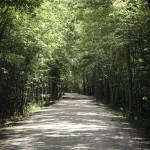THE AMERICAN TOBACCO TRAIL