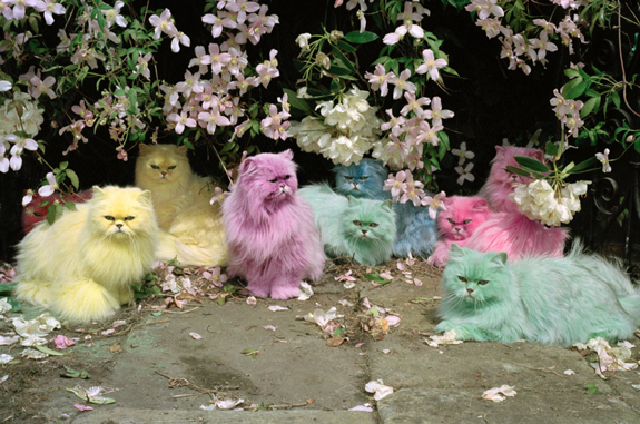 Pastel Cats_CopyrightTimWalkerPictures
