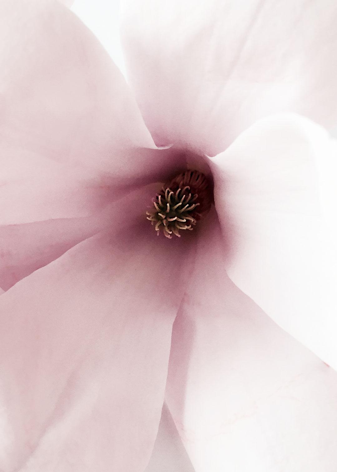 Insta_floral_study_1c