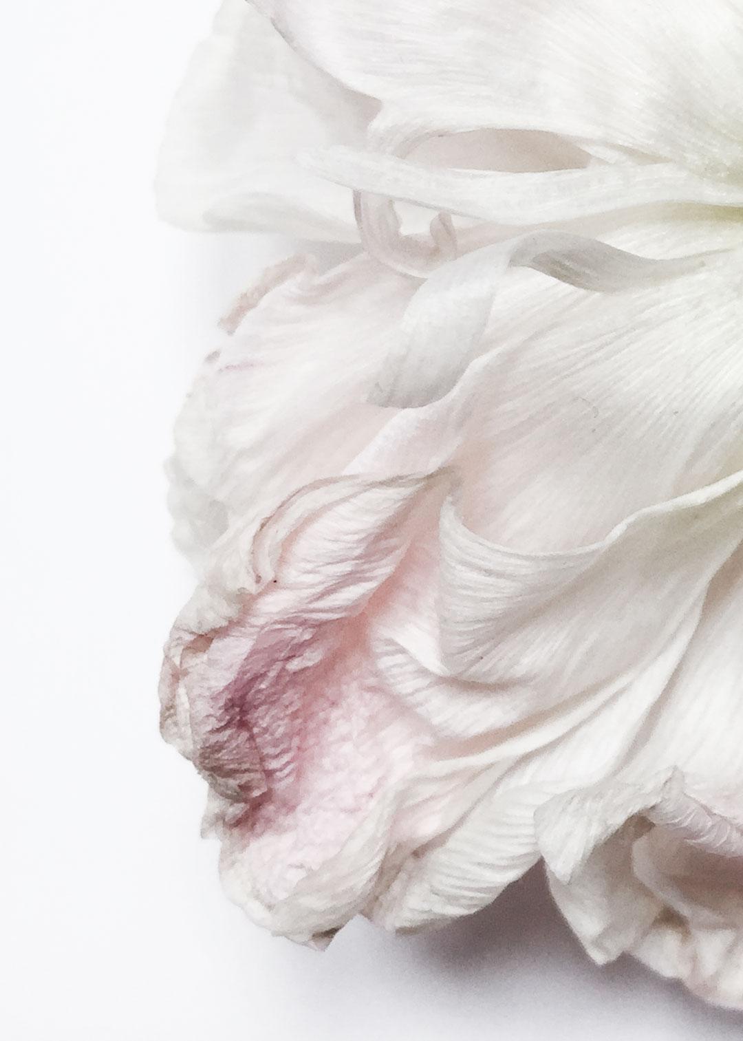 Insta_flower_study_3
